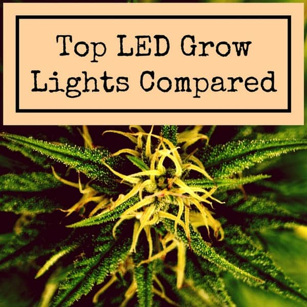 Grow Light Info Reviews Buying Guides Tips And Advice