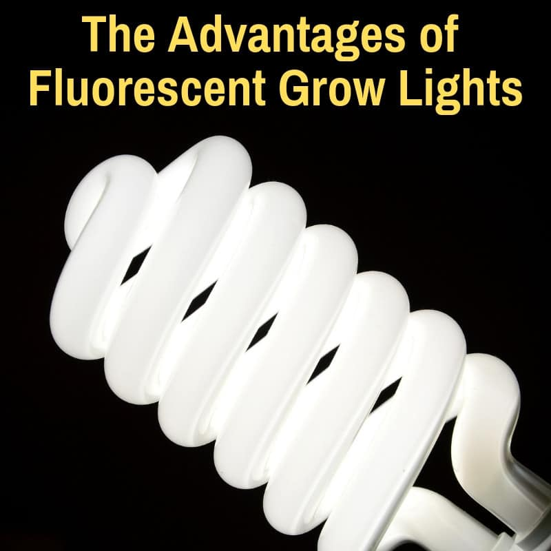 Pros of fluorescent grow light bulb