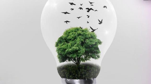 a grow light bulb