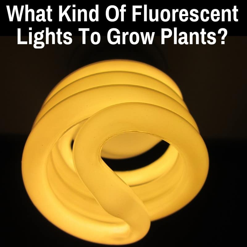 What Kind Of Fluorescent Lights To Grow Plants Including Weed