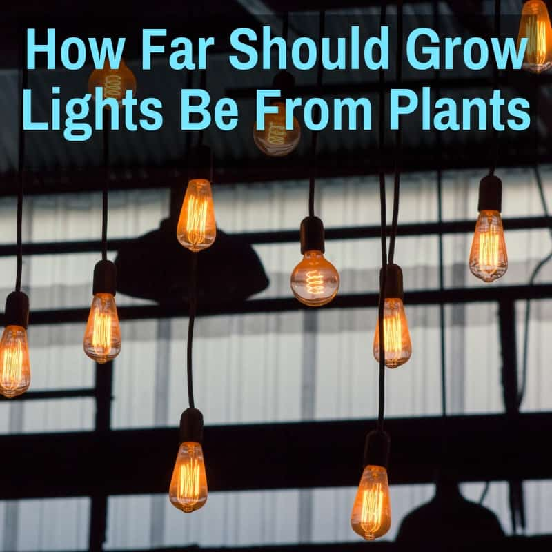 How Far Should Grow Lights Be From Plants (HID, LED, T5)