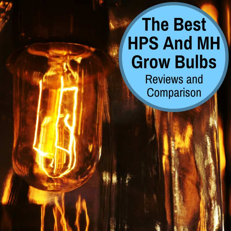 The Best Hph Grow Lamps
