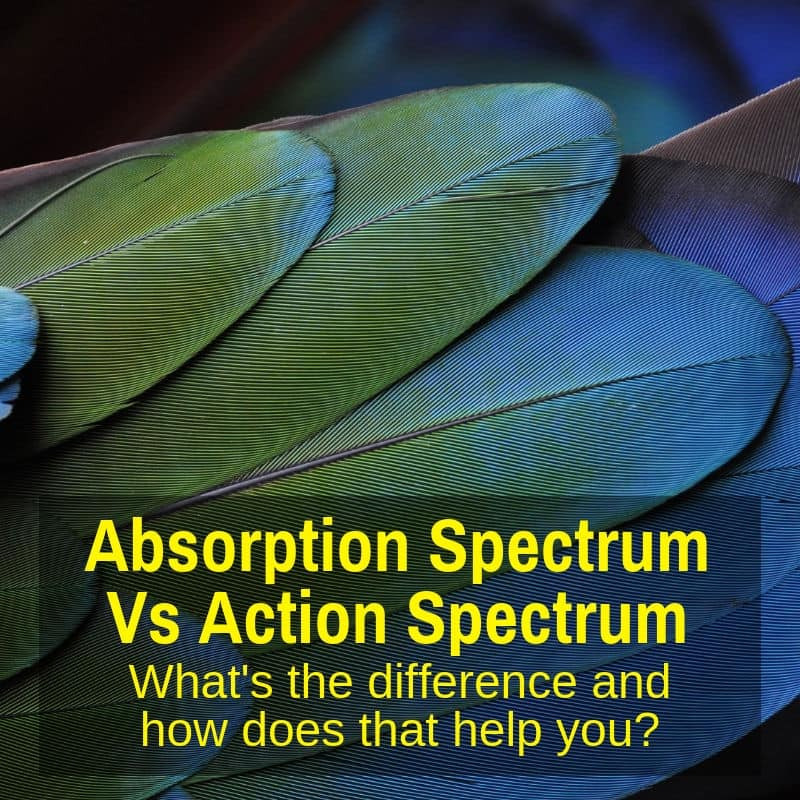 Action vs absorption spectra