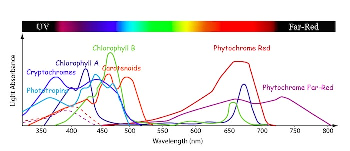 Absorption spectra for plants