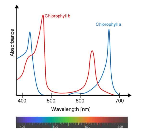 Action Spectrum For Photosynthesis