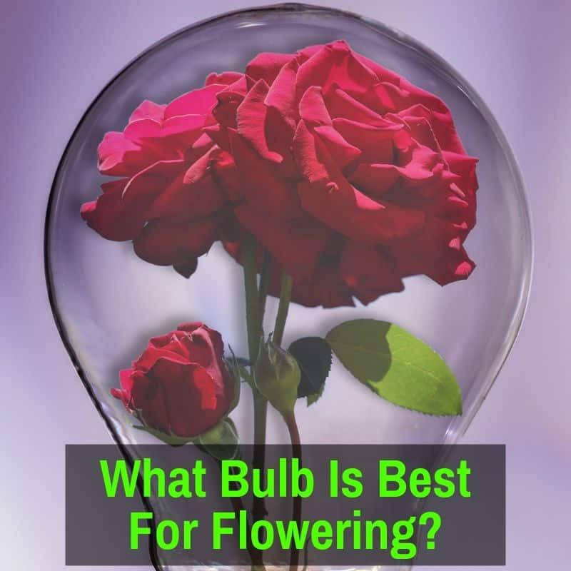 Flower in light bulb