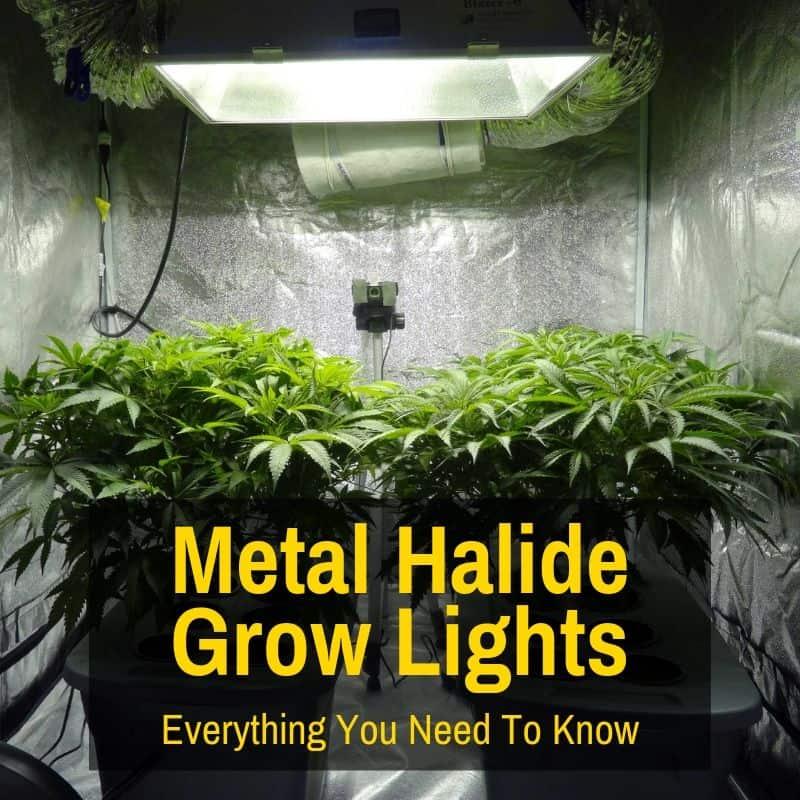 metal halide grow light in tent