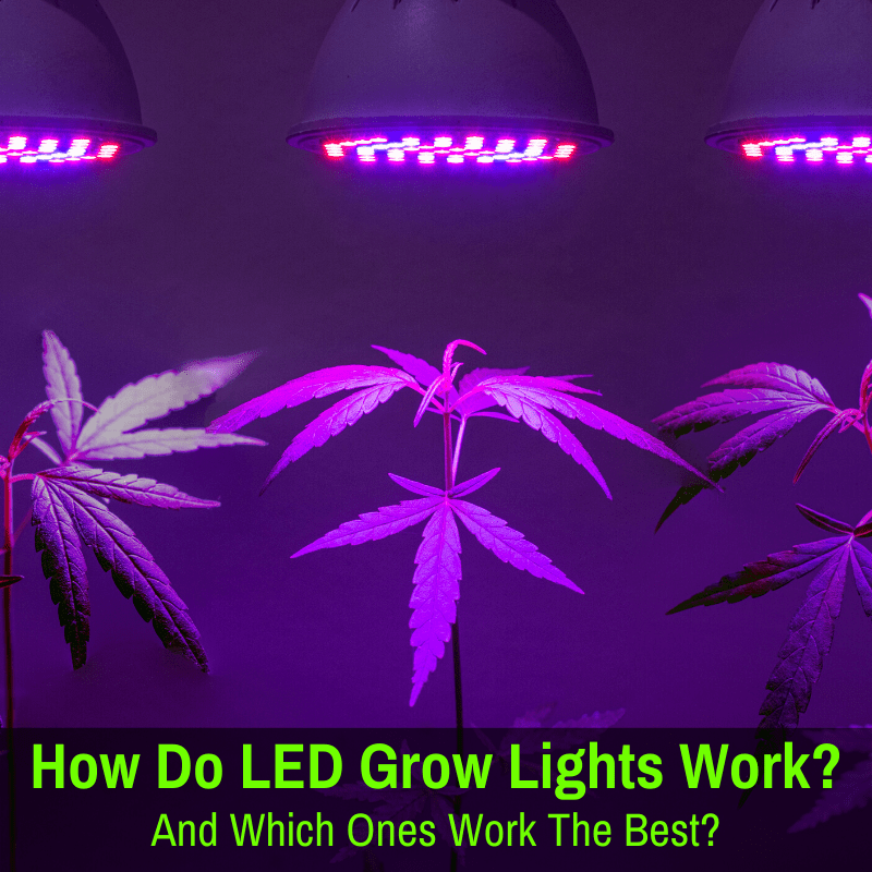 How do LED grow lights work