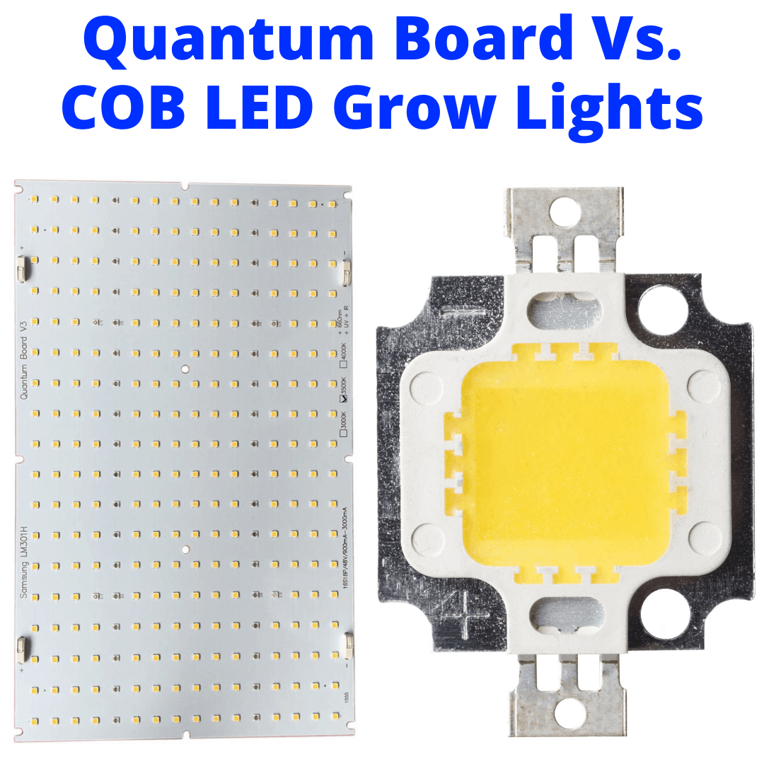 Quantum Board And COB LED Grow Lights Compared