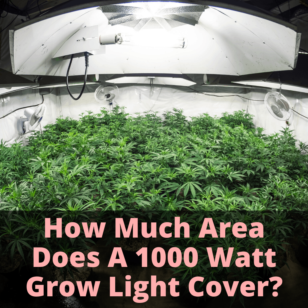 Coverage area of 1000 watt grow light