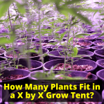 How Many Plants Can I Fit in a Grow Tent