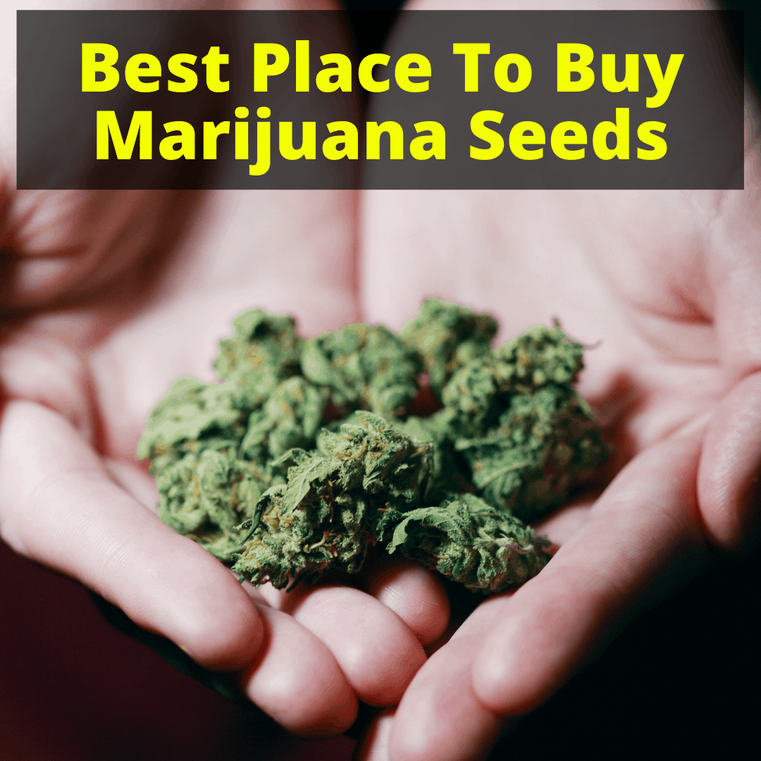 Best Place To Buy Marijuana Seeds