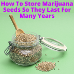 How To Store Marijuana Seeds