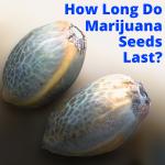 How Long Are Marijuana Seeds Good For
