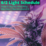 6/2 Light Schedule
