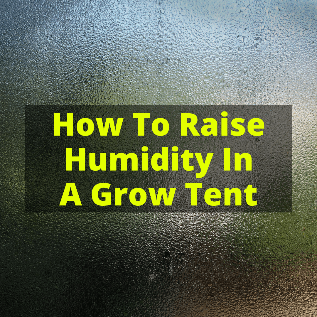 How To Raise Humidity In A Grow Tent