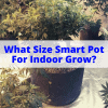 What Size Smart Pot For Indoor Grow