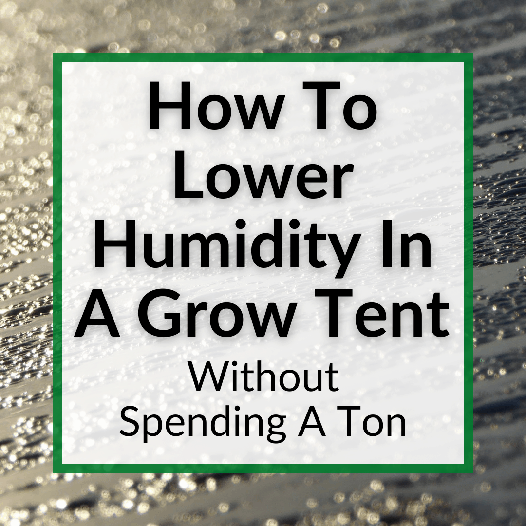 How To Lower Humidity In Grow Tent