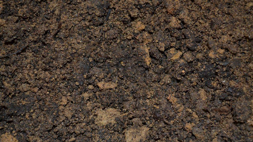 soil for weed