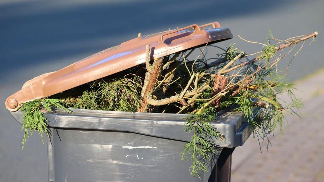 plant matter in the trash